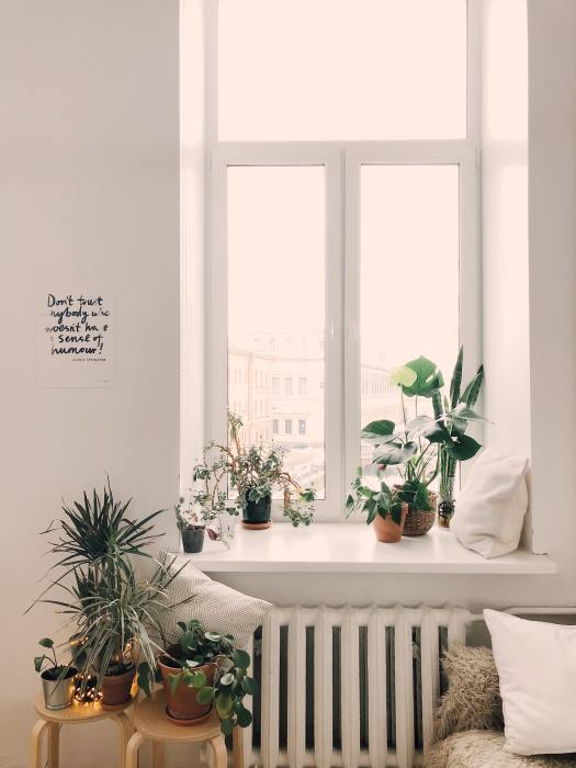 photo-of-green-leaf-potted-plants-on-window-and-stand-930004